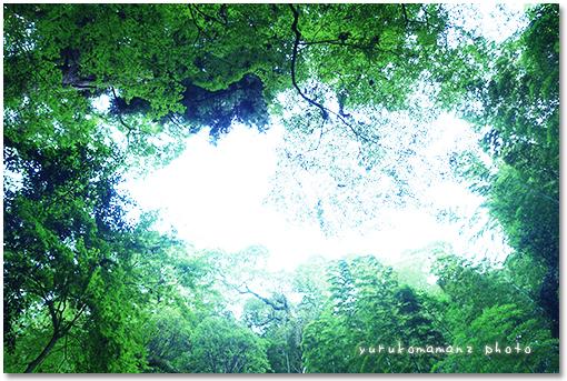 yurukomaman06093.jpg